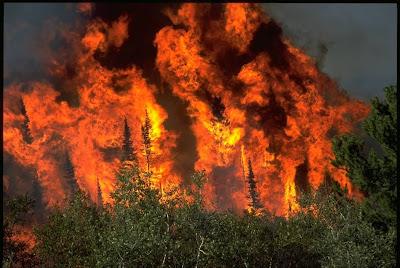 1295-wildfire