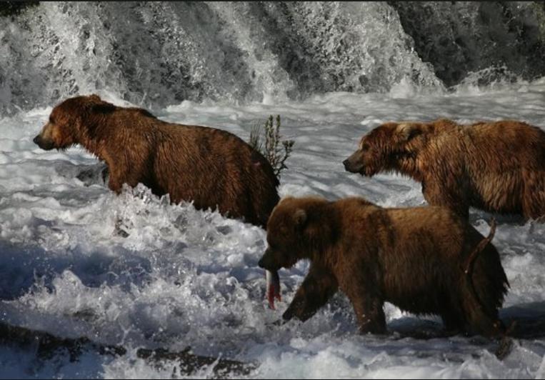 Superforecasting A Bear Market